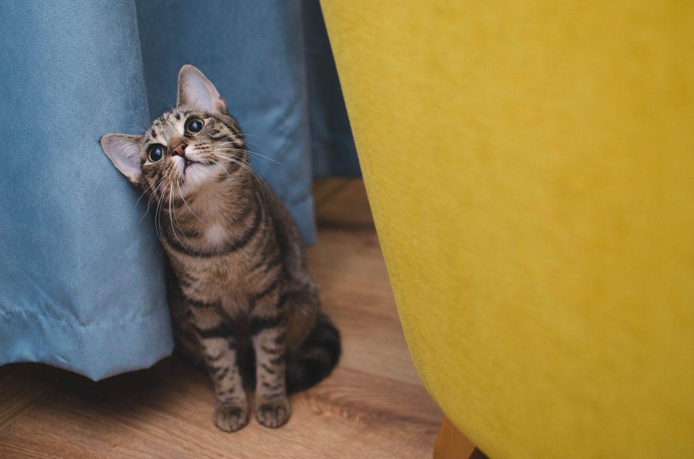 Стоит ли заводить кота