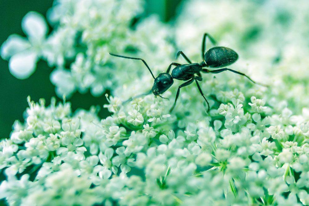Навіщо потрібна мурашина ферма