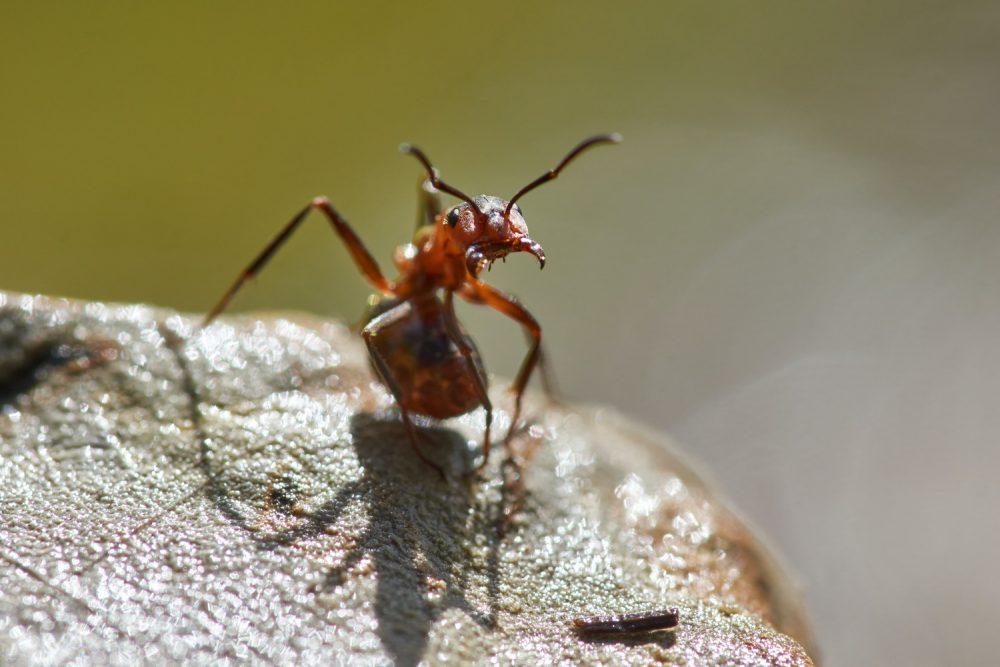 Чим годувати мурах