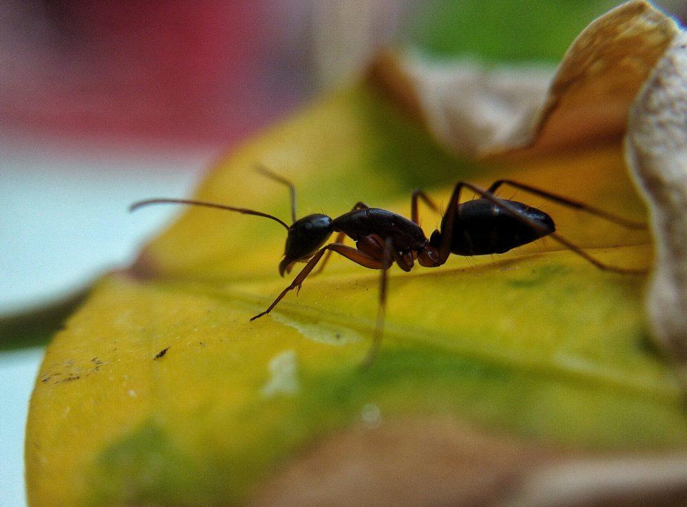 Як вибрати мурашину ферму