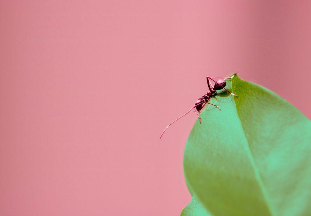 Як заселити мурашину ферму
