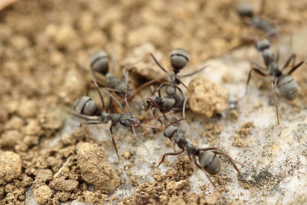 Как выглядит муравьиная ферма