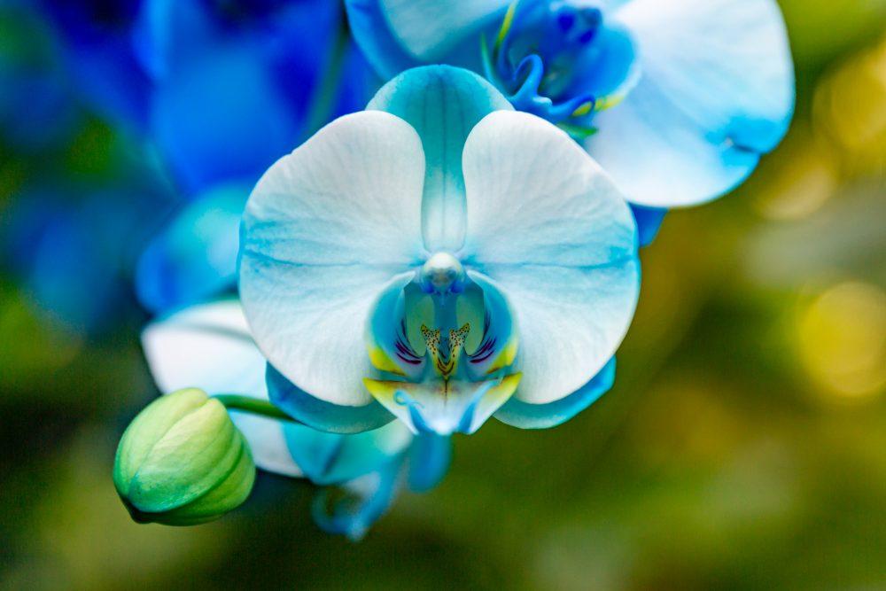Як вибрати орхідею