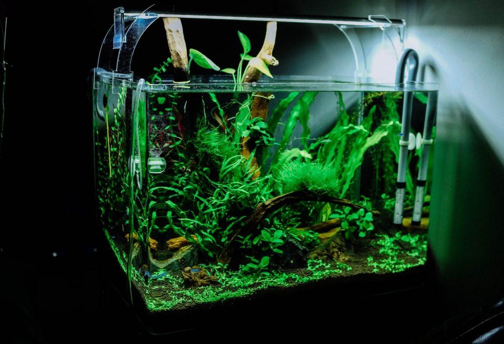 Як вибрати акваріум