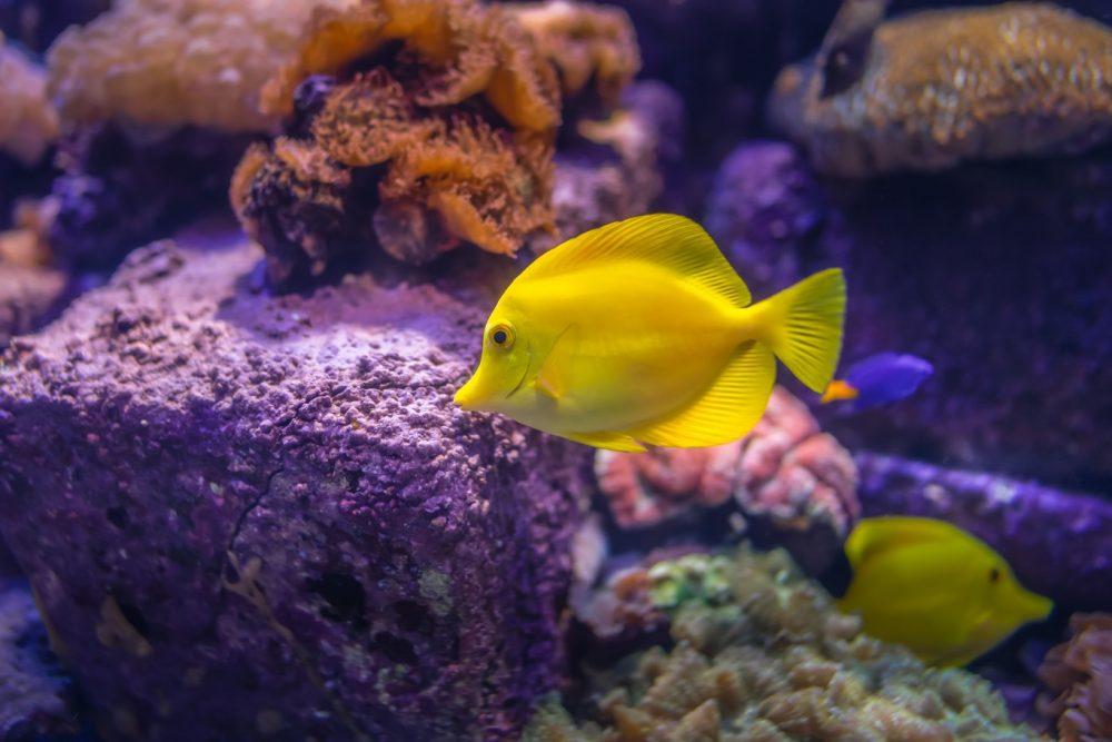 Який акваріум вибрати