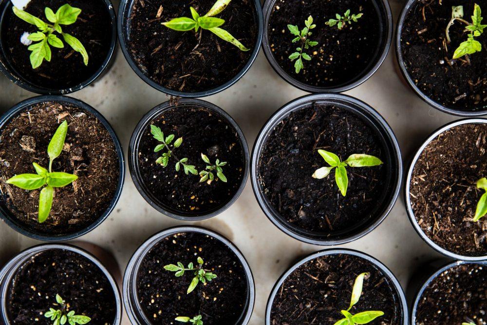 Рассада овощных растений