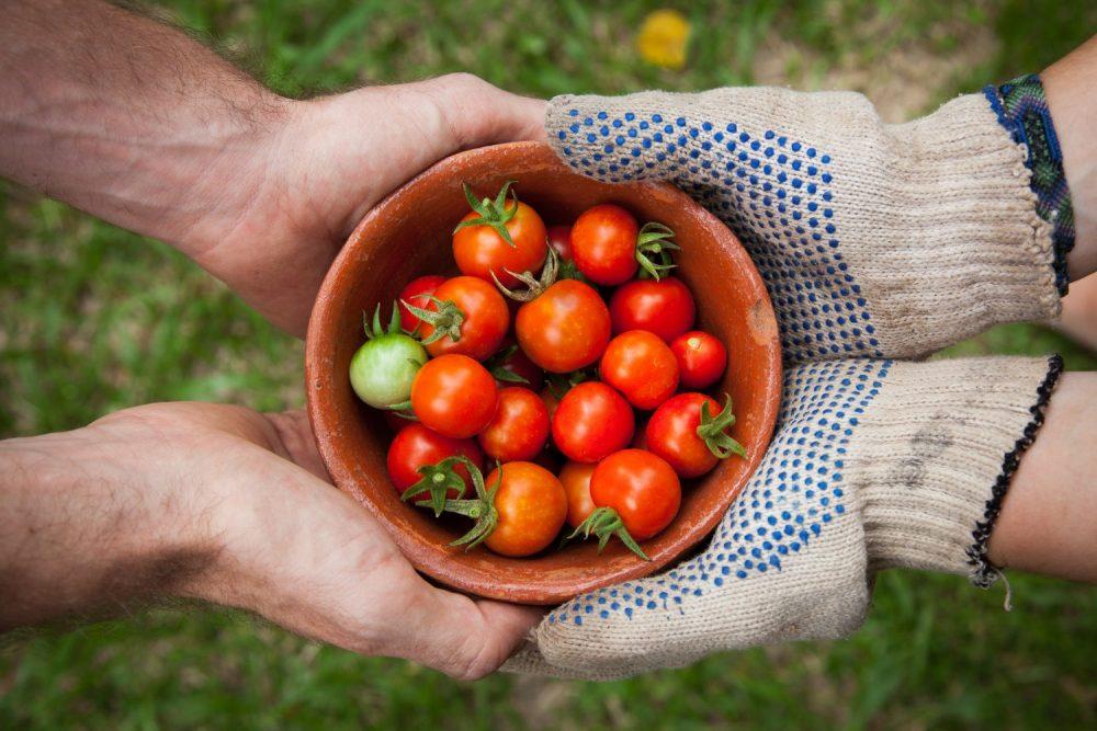 Сортовые семена