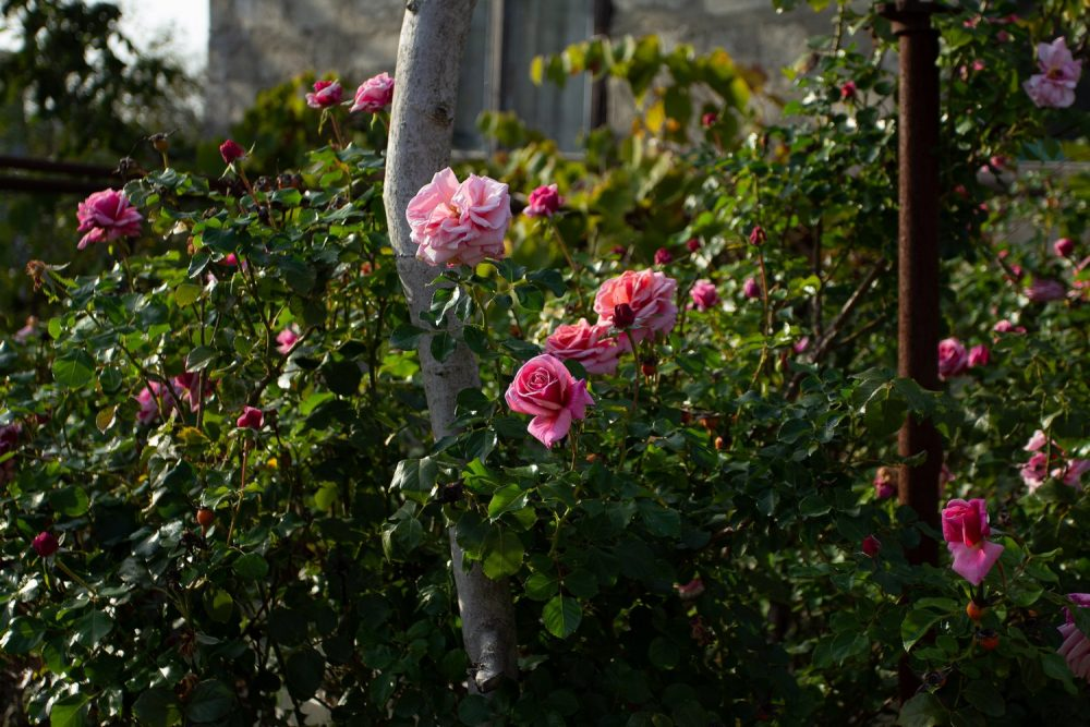 Многолетние цветы из рассады