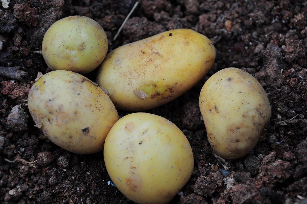Чищення молодої картоплі