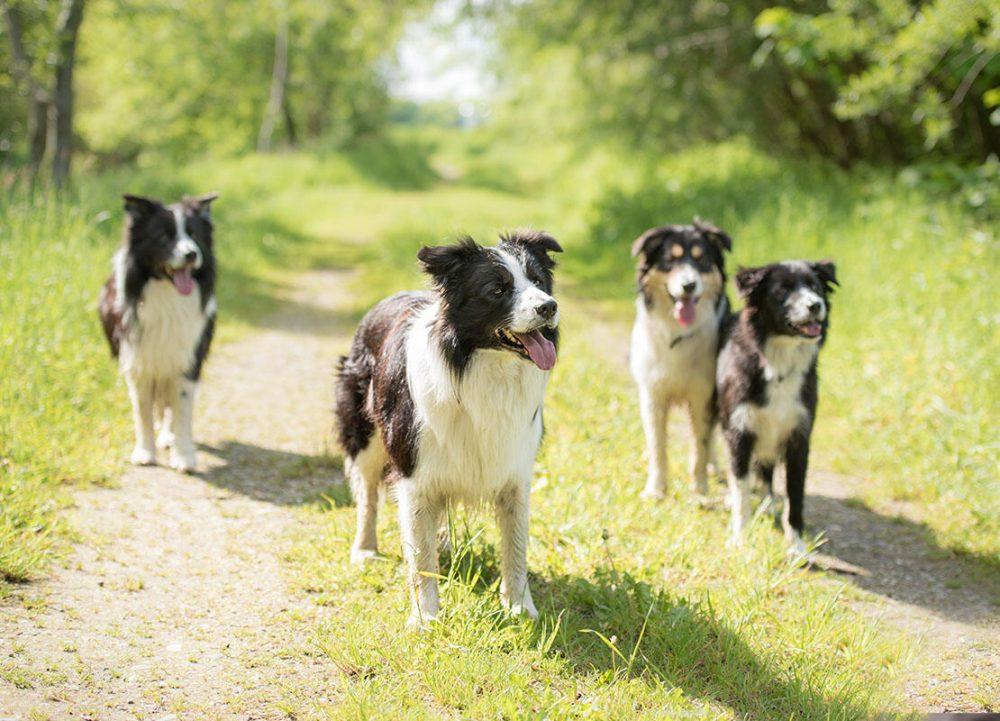 Як вибрати відлякувач собак