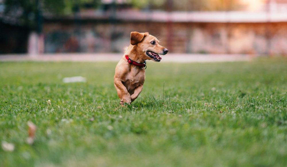 Як вибрати відлякувач собак правильно
